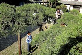 日本庭園の施工・管理